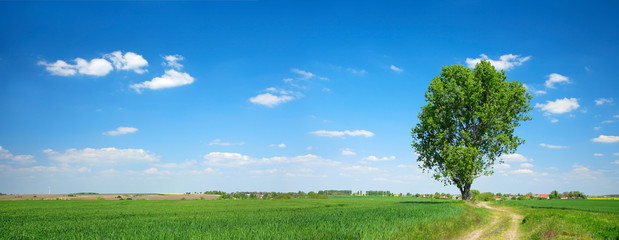 Panoramic Agricultural Landscape of Green Fields with Solitary Tree under Blue Sky in Spring