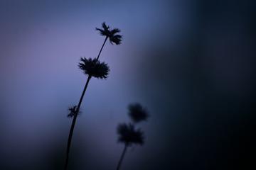 Nature. Meadow plants in dark