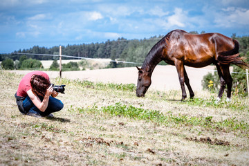 Man taking photo of brown wild horse