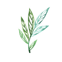 Abstract leaves watercolor as design elements isolated on white background. Herbal hand drawn illustration. Green sketch watercolor.