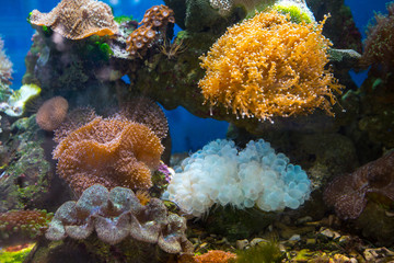 Beautiful underwater coral reaf garden
