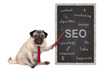 business pug dog holding red pointer, pointing out  search engine optimization, SEO, performance strategy, hand drawn on chalkboard, isolated on white background