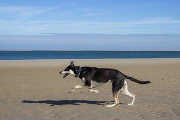 Laufender Hund am Strand