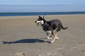 rennender hund am strand