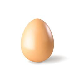 Chicken hen egg isolated