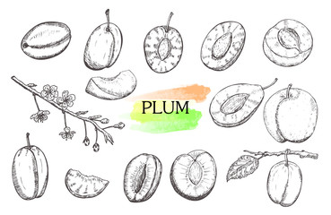 Hand drawn plum set isolated on white background.