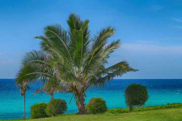 Beautiful palm tree on the ocean shore