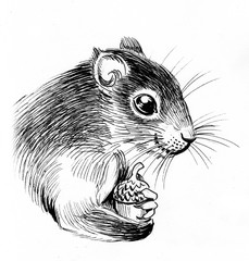 Squirrel with acorn. Ink black and white illustration