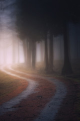 path in the foggy dark forest