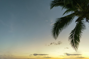 Palm tree leaves on sky background with copy space for your text message or content. natural backdrop. Summer Concept