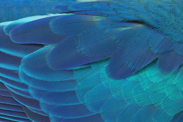 Beautiful Parrot Feathers, Colorful feathers