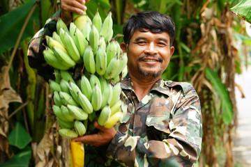 Farmer carrying of green bananas