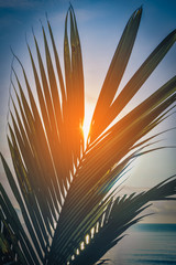 Wall Mural - Leaves of coconut palm tree at sunset near sea. Vintage tone.