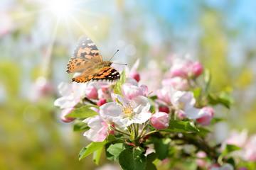 Frühling 446