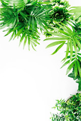 Tropical leaves and plants  on a white  background with space for text. Top view, flat lay.