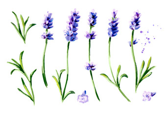 Lavender flower set. Watercolor hand drawn vertical illustration, isolated on white background