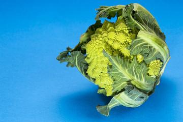 Romanesco cauliflower on a blue background