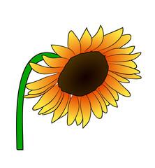 Vector illustration, cartoon orange sunflower on greem stem isolated on white background