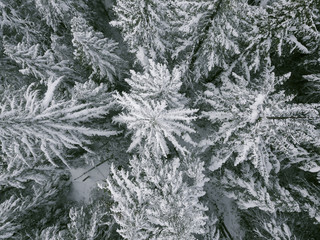 Overhead view of frozen trees on Mount Hood during winter