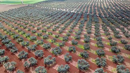Autocollant pour porte Oliviers Fuente Piedra Olive trees
