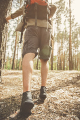 Close up back view of legs of young guy is walking across the pine forest with backpack. He is discovering new places