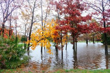 Hurricane  flood and wind damage