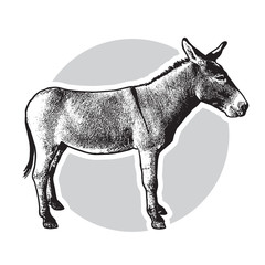 Donkey - black and white side view.