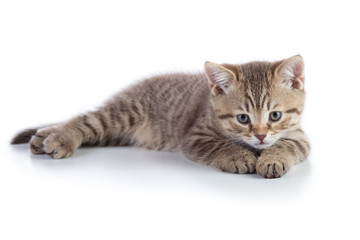 Small gray cat kitten lying isolated on white background