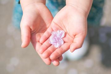 子どもの手のひらに乗せた桜の花びら_横