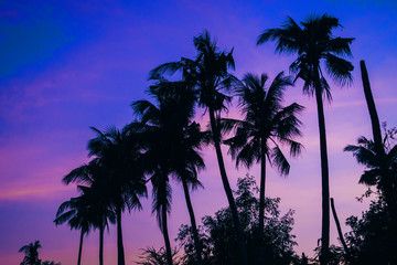 silhouettes of palm trees on the background of purple blue sky in summer at sunset