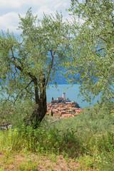 Blick vom Olivenhain auf Malcesine und Saligerburg, Italien