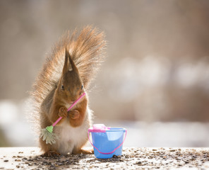 Red squirrel is holding an broom with a bucket