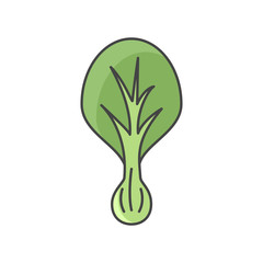 Vector color illustration of lettuce. Flat, color. Vivid picture of a vegetable. Fresh food