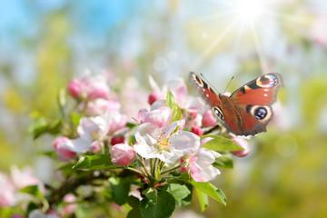 Frühling 444