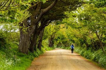 hiking between huge trees