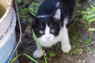 Cute black and white kitten in the garden
