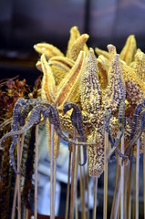 Fried seahorses - chinese delicacy at Wangfujiang street in China