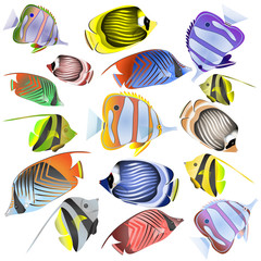 Sea fish collection isolated on white background.