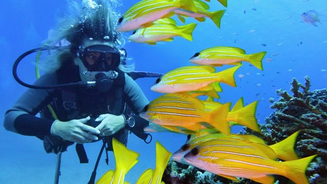 Woman scuba diver and shoal of yellow coral fish