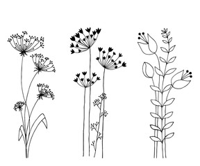 Hand drawn set of wild flowers. Isolated on white background.