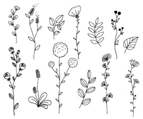 Hand drawn of vector vintage elements wild flowers and leaves collection. For invitations, greeting cards, quotes, blogs, posters.