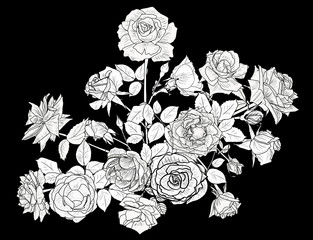 bunch of ten roses white sketch isolated on black