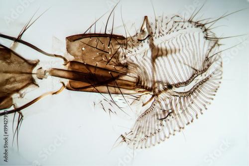 Mundwerkzeuge der Fliege\