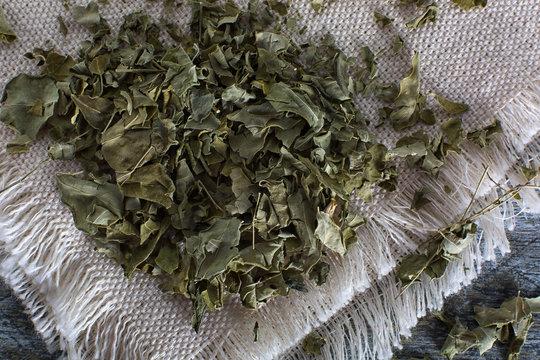 dried moringa tea