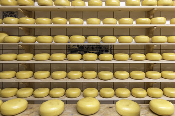 Block of Dutch cheese displayed on the tray in the cheese shop at Zaanse Schans, Netherlands