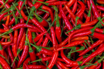 Red Chillies Background,Selective focus.Thai chillies.Organic ingredient thai food. Wall mural