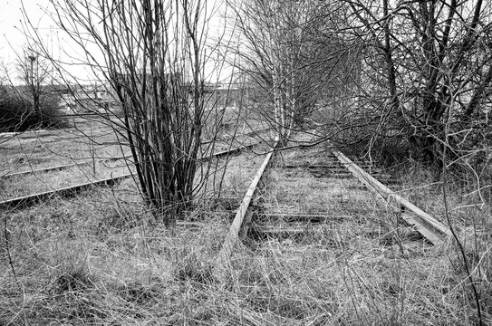 Dystopic image of a deserted and abandoned railroad. Trees and bushes that grow between the rails.
