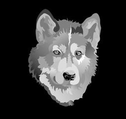 Husky dog monochrome vector illustration on black background