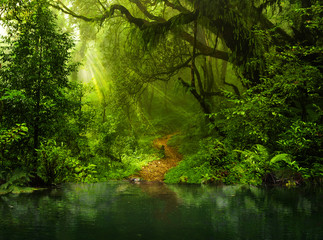 Asian tropical rainforest lake