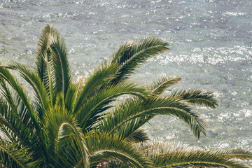palm trees against blue sea. palm tree leaves at tropical coast, vintage toned and stylized, coconut tree,summer tree ,retro, ideal background. enough room for copy, space and text
